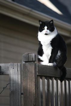 Love a black and white cat.