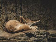 Kangaroo, Fox, Shit Happens, Twitter, Baby Bjorn, Foxes
