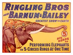 Ringling Brothers Circus: Performing Elephant