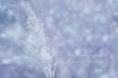 Landscape Snow White  Winter Wild Plant by KnowGodThroughArt, $28.00