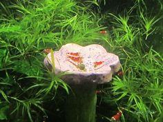 Blumen - Futterschale 8004-30 Mehrfarbig Garnelen Deko Echt Natur - AquaThier