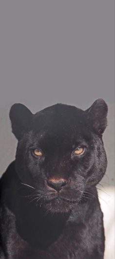 Scary Wallpaper, Black Wallpaper, Wallpaper Backgrounds, Panther Cat, Black Panther, Most Beautiful Animals, Beautiful Cats, Jaguar Wallpaper, Panther Pictures