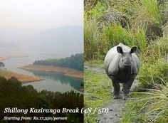 Visit 'Paradise Unexplored' with us, to experience nature-centric Shillong, wildlife at Kaziranga and the wettest places on Earth, Cherrapunji. Our 4 night/ 5 days break provides a compelling winter and early summer (Nov-April) holiday idea! Interested? Click here --> http://www.nivalink.com/holiday/ne-11
