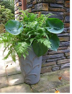 Hosta and Fern - I love the combo and the big leaves of the hosta.
