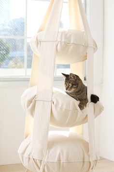 The Cat's Trapeze: Cirque du Soleil for Your Cats