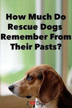 We wish we could take all the bad memories away. Can we? Dog Psychology, Dog Health Care, Bad Memories, Therapy Dogs, I Love Dogs, All Dogs, Dogs And Puppies, Dog Treats, Rescue Dogs
