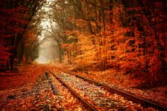 Fall leaves- who wants to take a fall train ride through the mountains?