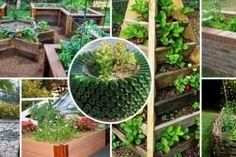 Iată cum puteți obține 2 găleți de roșii dintr-o singură tufă - Fasingur Plants, Outdoor Structures, Outdoor