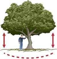 Caring for Mature Trees During A Drought - Sacramento Tree Foundation