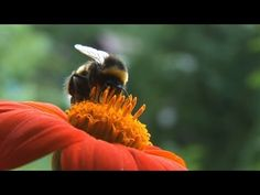 Pesticides hit non-pests: exposed bees forage poorly, die more often.