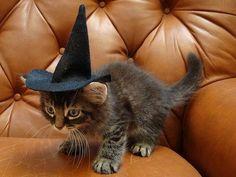 ハロウィンの猫画像 02|ねこLatte+