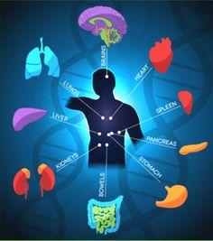 Une  approche du bien être et de la santé par des techniques et thérapies naturelles. une autre façon d'envisager la santé, la guérison. Les approches corps-esprit.