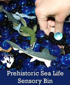 Prehistoric Sea Life Water Bead Sensory Bin - 3Dinosaurs.com