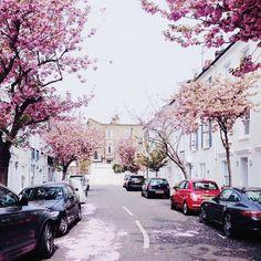 Blossom on the streets --> Adventures Pinterest: @FlorrieMorrie00 Instagram: @flxxr_