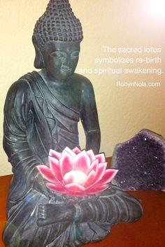 The sacred lotus symbolizes re-birth and spiritual awakening.