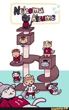 haikyuu, nekoma.. I mean it's not like I've named all my cats after them already.... nooooo