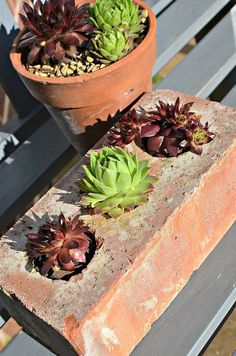 DIY Yard Brick Projects, Brick Planter For Succulents Succulents In Containers, Cacti And Succulents, Planting Succulents, Planting Flowers, Cactus Plants, Container Flowers, Container Plants, Potted Plants, Brick Crafts