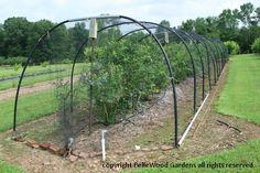 Bird Netting On Blueberry Bushes Gardening Ideas