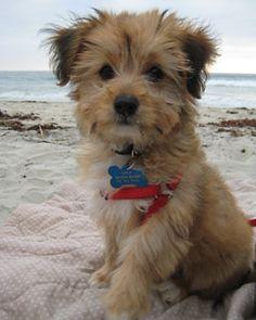 terrier mix-kinda looks like my boy
