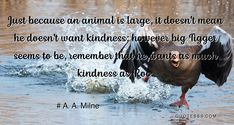 Just because an animal is large, it doesn't mean he doesn't want kindness; however big Tigger - A. Milne quote at QuoteSSS Big Tigger, Best Quotes, Inspirational Quotes, Movie Posters, Life Coach Quotes, Best Quotes Ever, Film Poster, Inspiring Quotes, Popcorn Posters