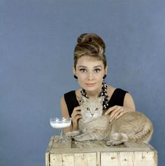 Audrey and Orangey, stars of  Breakfast at Tiffany's