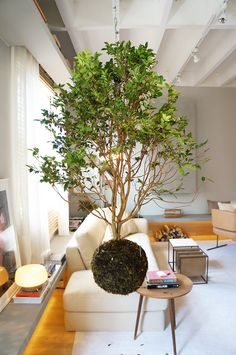 TENDÊNCIAS DA CASA COR SÃO PAULO 2016 #design #decor #decoracao Home Interior Design, Interior Architecture, Plantas Indoor, Bonsai Plants, Bedroom Plants, Exotic Plants, Succulents Diy, Balconies, Plant Decor