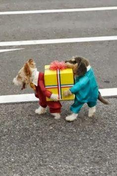 Awesome dog costume
