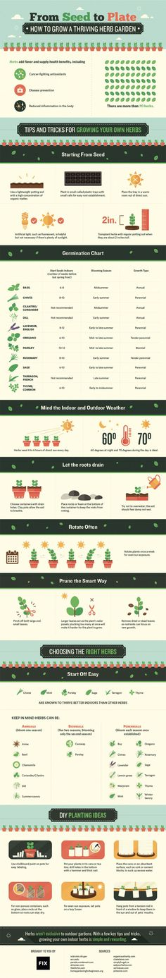 from seed to plate how to grow a thriving herb garden infographic