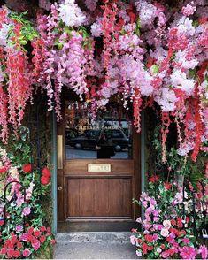 The Ivy Chelsea Garden Inst The Ivy Chelsea, Chelsea Garden, Blogging, Spring Starts, Garden Photos, Beauty Photos, Summer Flowers, Fresh Flowers, Planting Flowers