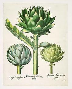 Flores de bach para adelgazar donde comprar emulsion