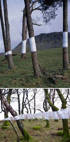 """""""This is an ongoing series of constructed photographs rooted in the forest. These works, carried out in Surrey, Hampshire and Wales, involve site specific interventions in the landscape, 'wrapping' trees with white material to construct a visual relationship between tree, not-tree and the line of horizon according to the camera's viewpoint."""""""