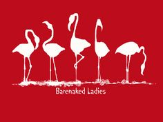 Red Flamingos by mci021 on deviantART