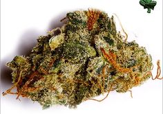 We sell marijuana and marijuana safely to all people and patients who are in need, either for pain or to smoke. Marijuana is not dangerous!.. it is a healing herb that helps in relaxation and is good for your health. It is known to cure cancer. we are legit and get our information from contacting us. delivery is 100% discreet and confidential.