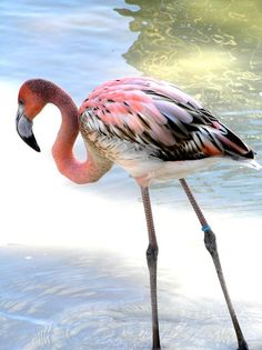 Amazing wildlife. Flamingo photo
