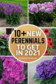 Looking for new plant varieties for your garden? This list of the best new perennials for 2021 will give you some ideas for your shopping list | Shade Perennials Partial Shade Perennials, Shade Flowers Perennial, Full Sun Perennials, Flowers Perennials, Full Sun Flowers, Full Sun Plants, Small White Flowers, Phlox Plant, Yarrow Plant