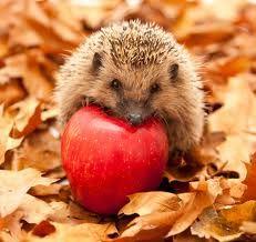 Hedgehogs love apples