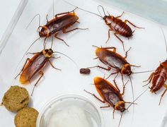 Pest Control Services, Bed Bugs, Protecting Your Home, Heating Systems, Household, Mosquitoes, Rodents, Ants, Offices