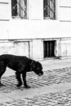 Katuvalokuvausta Prahassa | Asuntomessut