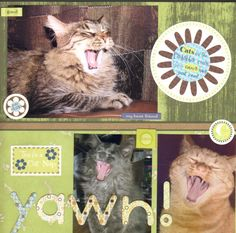 Cats yawning, hilarious scrapbooking page. Maybe add people or dogs too?