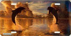 Celestial Harmony Dolphin License Plate [AS4073] Novelty License Plates, Dolphins, Celestial, Painting, Painting Art, Paintings, Common Dolphin, Painted Canvas, Seal