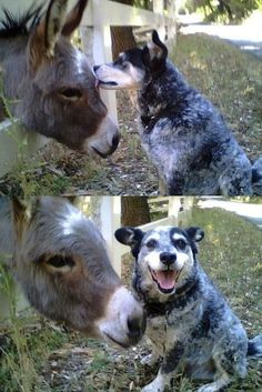 This dog loves its buddy <3