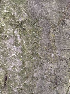 Detailed bark of textures and colours...