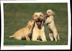 family pets - fantastic image! pets #pets #love