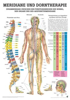 Meridiane und Dorntherapie - Rüdiger AnatomieMeridiane und Dorntherapie - - Poster (24cm x 30cm) - Lehrtafel (70cm x 100cm) jeweils aus hochwertigem Papier