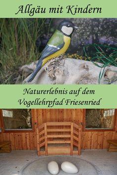 Naturentdeckerrunde: der Vogellehrpfad Friesenried Travel Guide, Germany, Animals, Group, Board, Blog, Outdoor, Hiking With Kids, Families