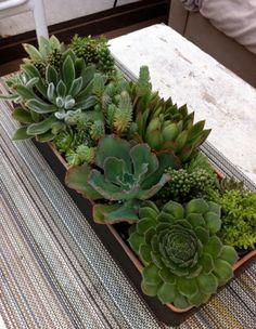 ..Attractive arrangement of succulents