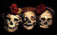Asian Human Trophy Skulls Ancestor Skulls Head Hunting Human Trophy Skulls David Howard Tribal Art