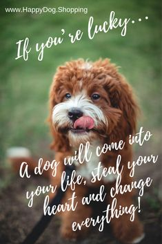 Dog Quotes Love and Loyalty HappyDog.Shopping – Funny Dog Quotes – Dog Quotes Love and Loyalty HappyDog.Shopping The post Dog Quotes Love and Loyalty HappyDog.Shopping appeared first on Gag Dad. Puppy Quotes, Dog Quotes Love, Dog Quotes Funny, Cat Quotes, Animal Quotes, Rescue Dog Quotes, I Love Dogs, Cute Dogs, Pekinese