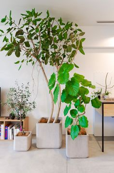 When you try to design the interior decoration of your home, you may want to move the indoor garden designs into your home. In such a case, indoor pla. Green Flowers, Green Design, Shade Trees, Garden Decor, Garden Design, Potted Trees, Small Garden, Plant Decor Indoor, Green Interiors
