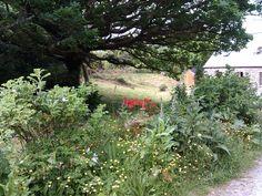 . Montages, Photomontage, Plants, Flora, Plant, Planting